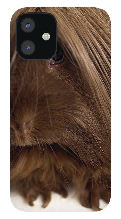Pets IPhone 12 Case featuring the photograph Long Haired Guinea Pig, Close-up by Michael Blann