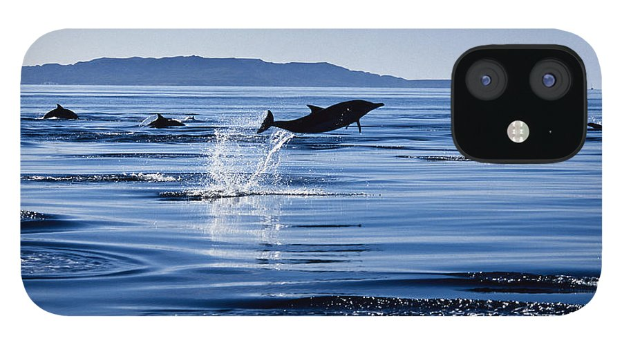 Latin America iPhone 12 Case featuring the photograph Long-nosed Common Dolphin,delphinus by Gerard Soury