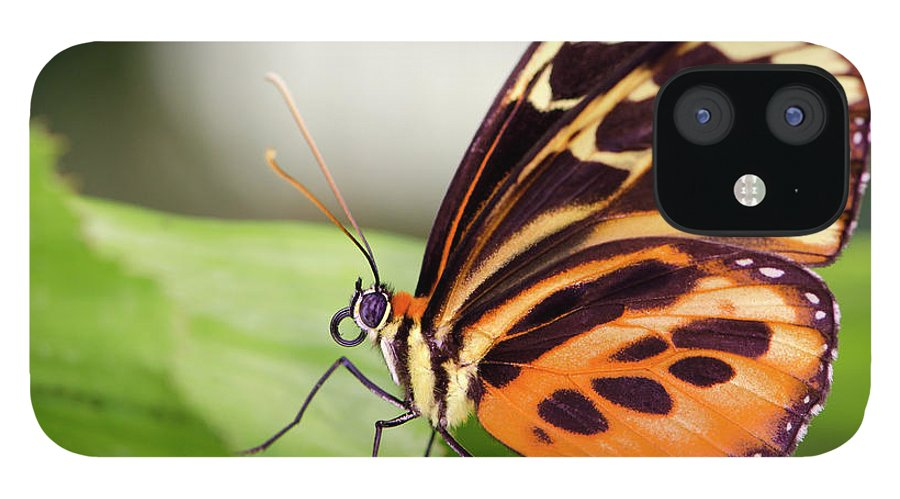 Flowerbed IPhone 12 Case featuring the photograph Macro Insect Common Tiger Glassywing by Elementalimaging