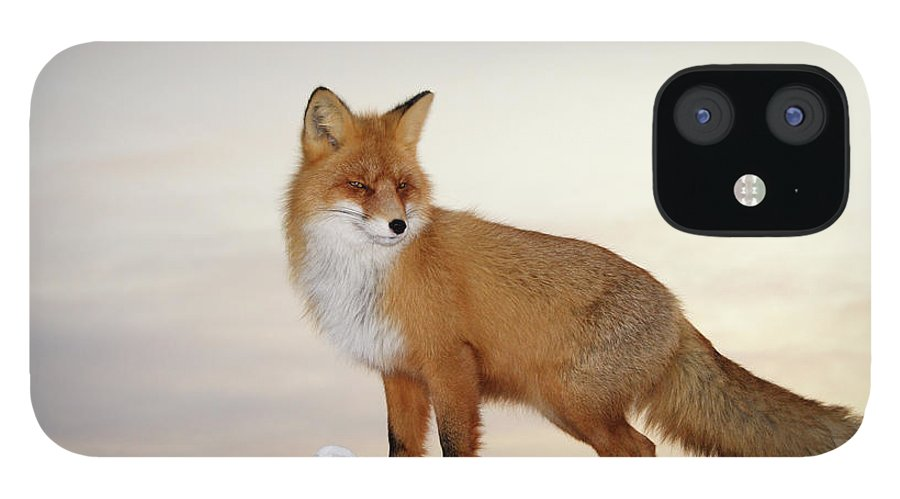 Black Color IPhone 12 Case featuring the photograph Majestic Fox by Dmitrynd