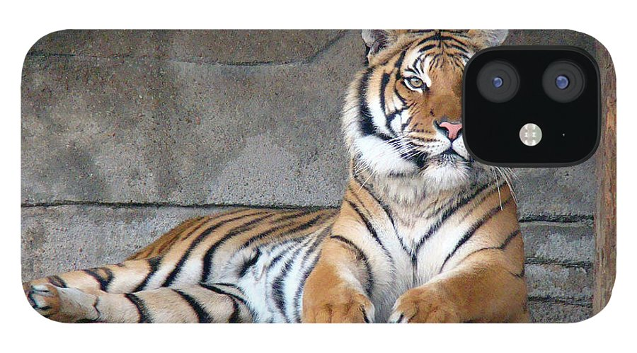 Animal Themes iPhone 12 Case featuring the photograph Malayan Tiger by Photography By P. Lubas