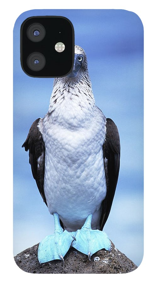 Animal Themes IPhone 12 Case featuring the photograph Masked Booby Sula Dactylatra Galapagos by Art Wolfe