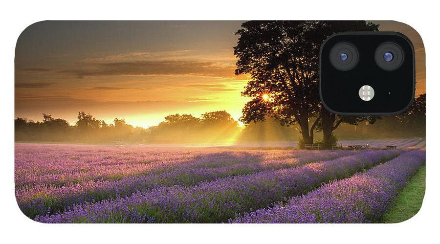 Tranquility IPhone 12 Case featuring the photograph Mayfair Lavender At Sunrise by Getty Images