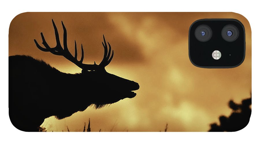 Animal Themes iPhone 12 Case featuring the photograph Moose At Sunrise by Photo By James Keith