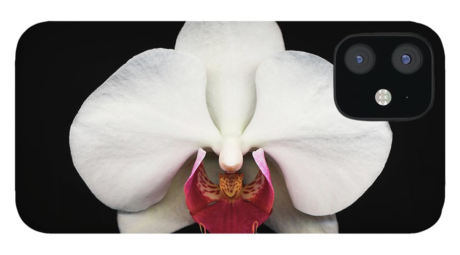 Black Background IPhone 12 Case featuring the photograph Moth Orchid Against Black Background by Mike Hill