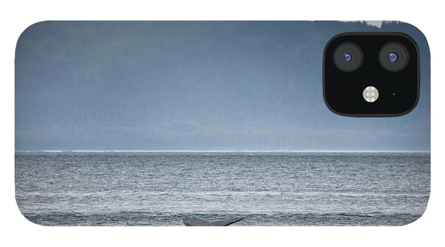 Water's Edge IPhone 12 Case featuring the photograph Mother And Calf Whale Tails Megaptera by Blake Kent / Design Pics