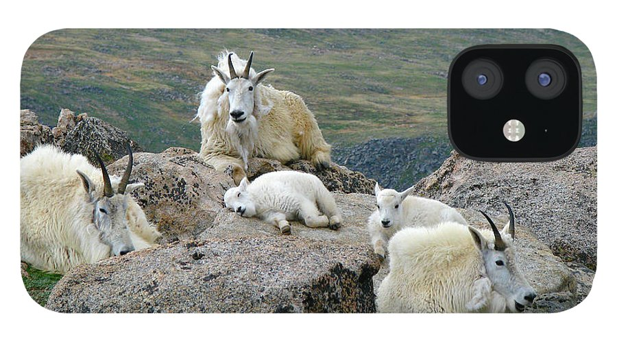 Horned iPhone 12 Case featuring the photograph Mountain Goats In The Rocky Mountains by Carl Neufelder