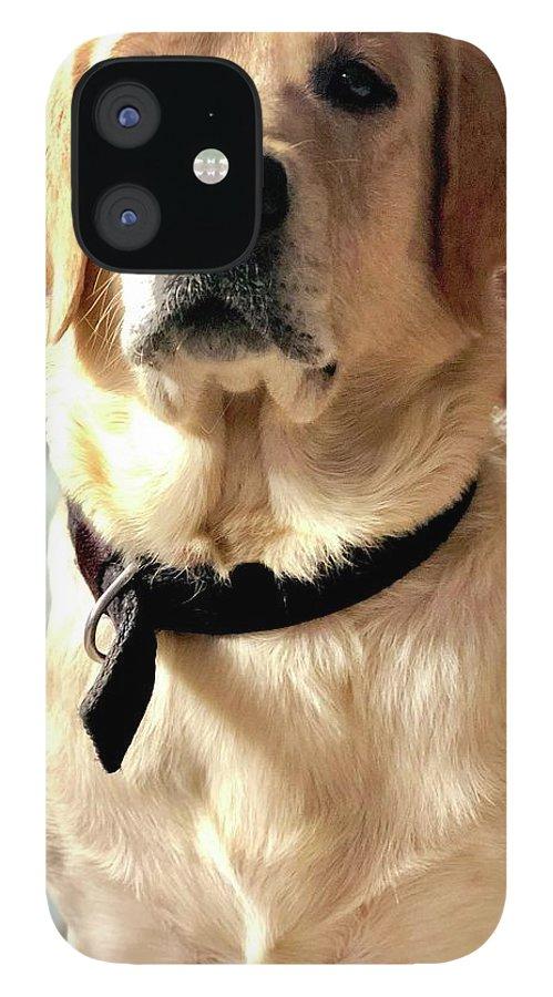 Labrador Dog IPhone 12 Case featuring the photograph Labrador Dog by Arun Jain