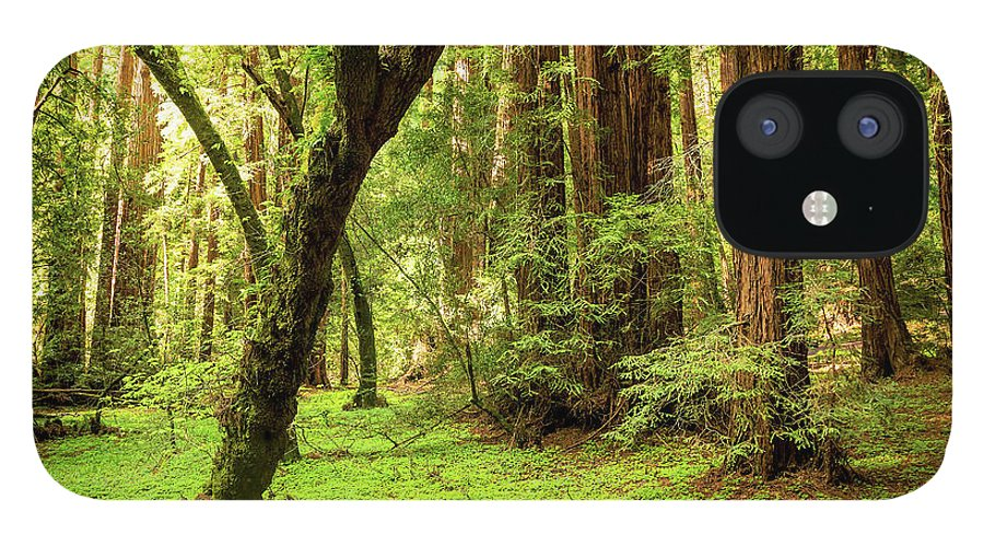 Tranquility IPhone 12 Case featuring the photograph Muir Woods Forest by By Ryan Fernandez