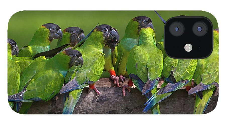 Vertebrate iPhone 12 Case featuring the photograph Nanday Parakeets Perched In A Row In by Mint Images - Art Wolfe