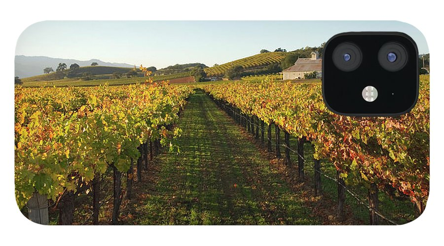Scenics IPhone 12 Case featuring the photograph Napa Valley Vineyard In Autumn by Leezsnow