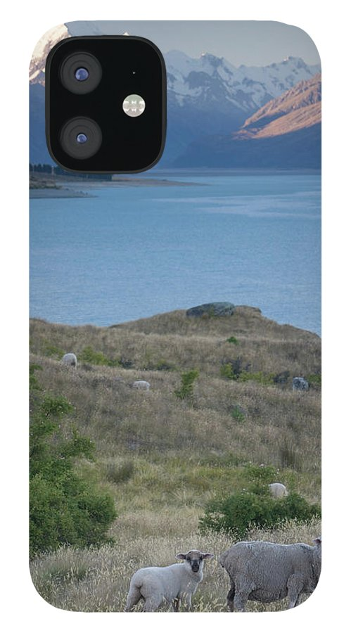 Scenics IPhone 12 Case featuring the photograph New Zealand, South Island, Sheep by Paul Souders