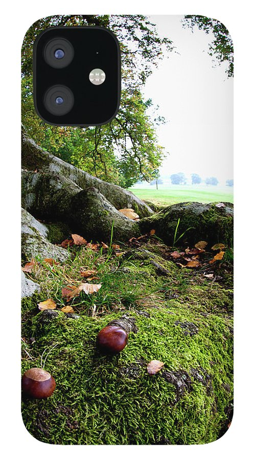 Nut IPhone 12 Case featuring the photograph Nuts And Fallen Leaves At The Foot Of A by John Short / Design Pics