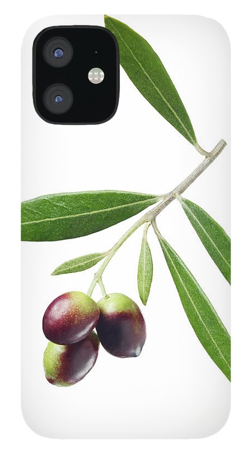 White Background IPhone 12 Case featuring the photograph Olives On Branch by Lauren Burke