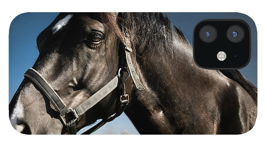 Horse IPhone 12 Case featuring the photograph On The Meadow by Pixalot