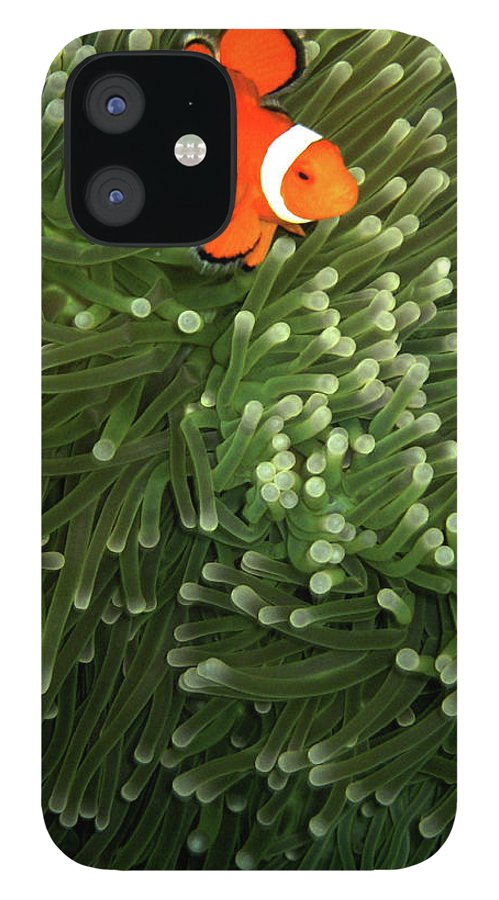 Underwater IPhone 12 Case featuring the photograph Orange Fish With Yellow Stripe by Perry L Aragon