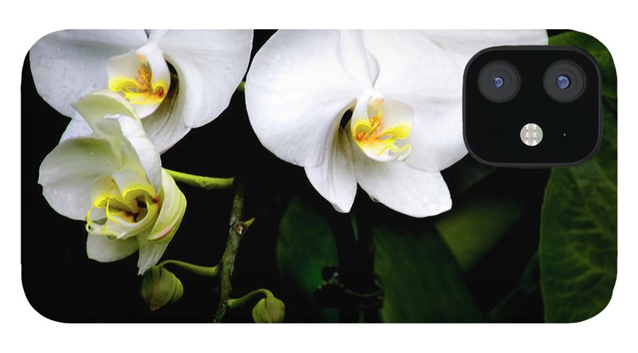 White Orchids Leaves In The Background IPhone 12 Case featuring the photograph Orchids And Leaves by Harold Silverman - Flowers