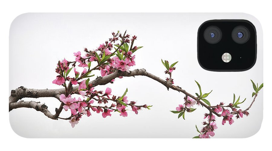 Season IPhone 12 Case featuring the photograph Peach by Sdlgzps