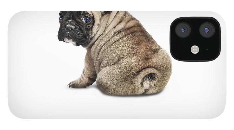 Pets IPhone 12 Case featuring the photograph Pedigree French Bulldog Against A White by Andrew Bret Wallis