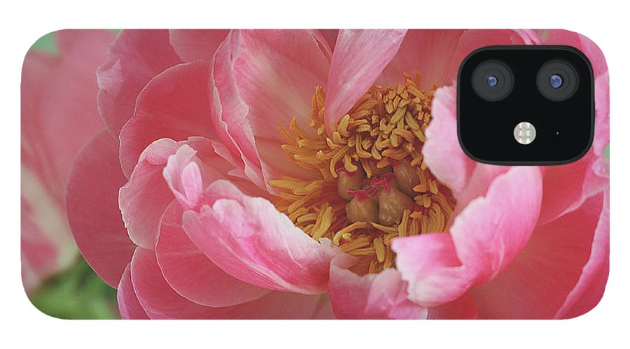 California iPhone 12 Case featuring the photograph Peony by © 2011 Staci Kennelly