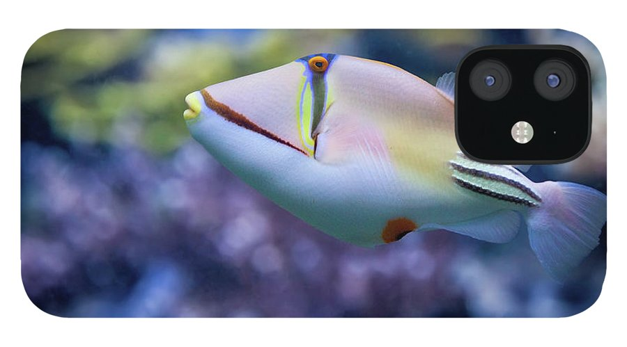 Underwater iPhone 12 Case featuring the photograph Picasso Triggerfish by Reynold Mainse / Design Pics