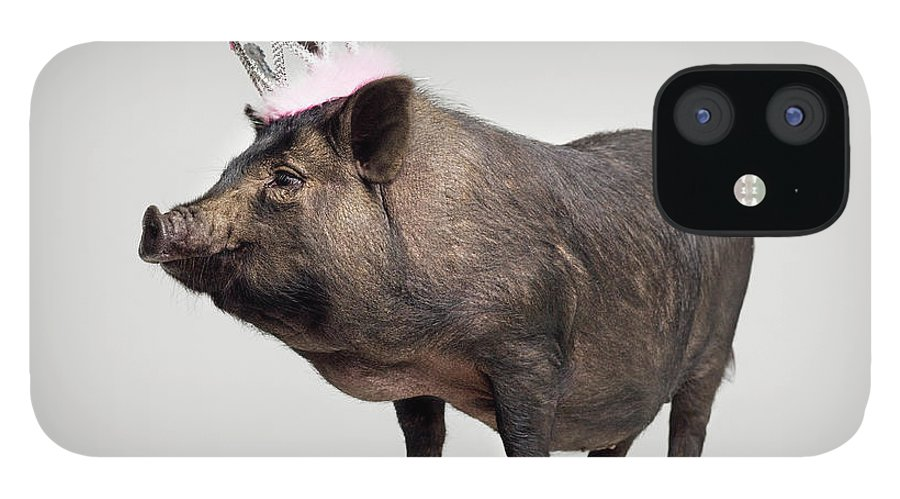 Crown IPhone 12 Case featuring the photograph Pig With Toy Crown On Head, Studio Shot by Roger Wright