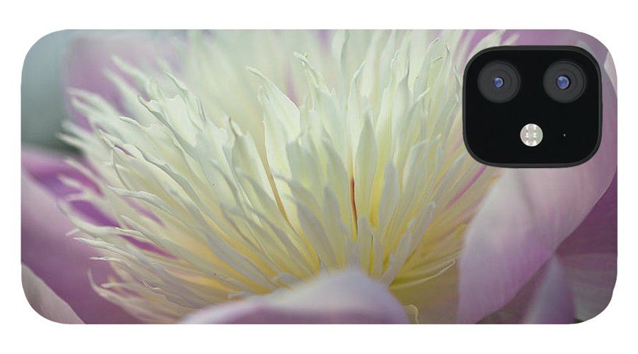 Toronto IPhone 12 Case featuring the photograph Pink And White Peony by Lynda Murtha