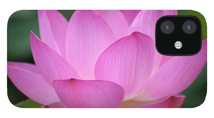 Petal IPhone 12 Case featuring the photograph Pink Backlit Lotus - Largest Collection by Narcisa