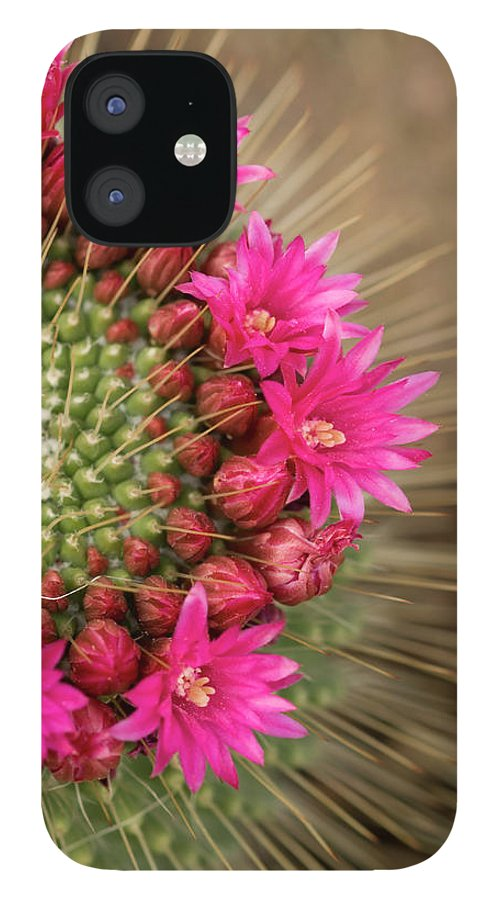 Bud IPhone 12 Case featuring the photograph Pink Cactus Flower In Full Bloom by Zepperwing