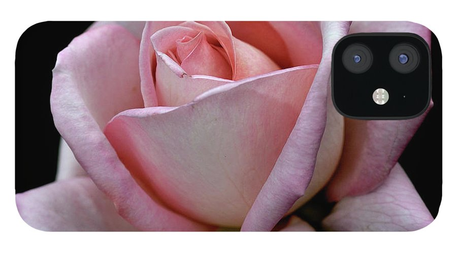 Part Of A Series IPhone 12 Case featuring the photograph Pink Rose by I Love Photo And Apple.