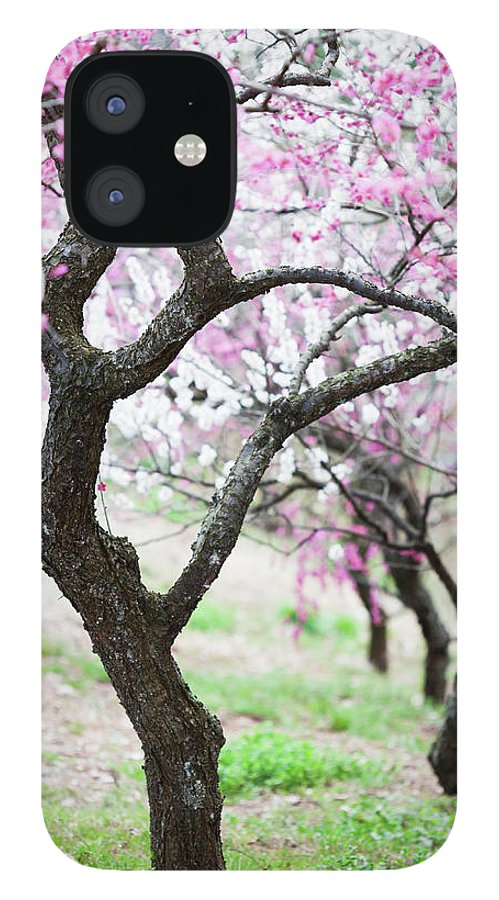 Scenics IPhone 12 Case featuring the photograph Plum Blossoms by Ooyoo