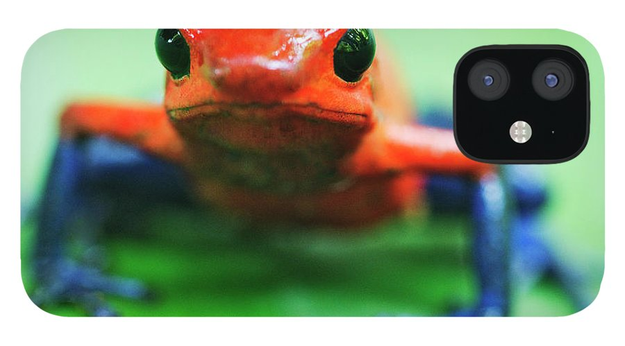 Animal Themes IPhone 12 Case featuring the photograph Poison Dart Frog by Jeremy Woodhouse