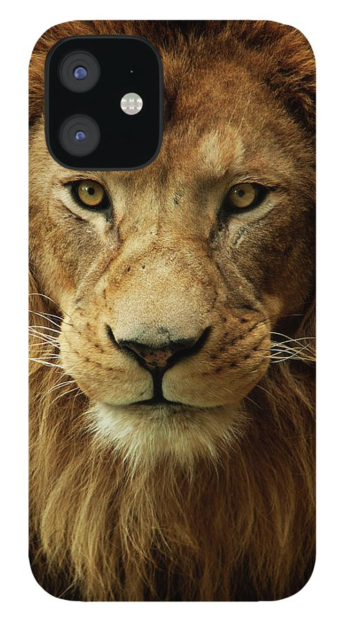 Animal Themes IPhone 12 Case featuring the photograph Portrait Male African Lion by Brit Finucci