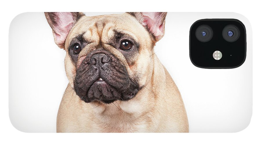 Pets IPhone 12 Case featuring the photograph Portrait Of A French Bulldog by @hans Surfer