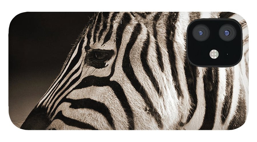 Black Color IPhone 12 Case featuring the photograph Portrait Of A Young Zebra by Cruphoto
