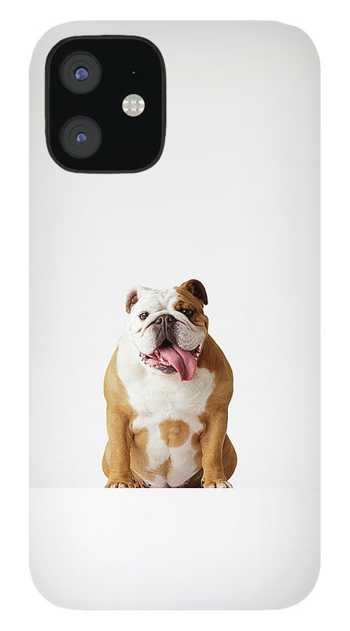 Pets iPhone 12 Case featuring the photograph Portrait Of British Bulldog Sitting by Compassionate Eye Foundation/david Leahy