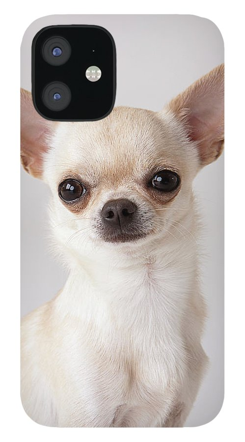 Pets IPhone 12 Case featuring the photograph Portrait Of Chihuahua by Compassionate Eye Foundation/david Leahy