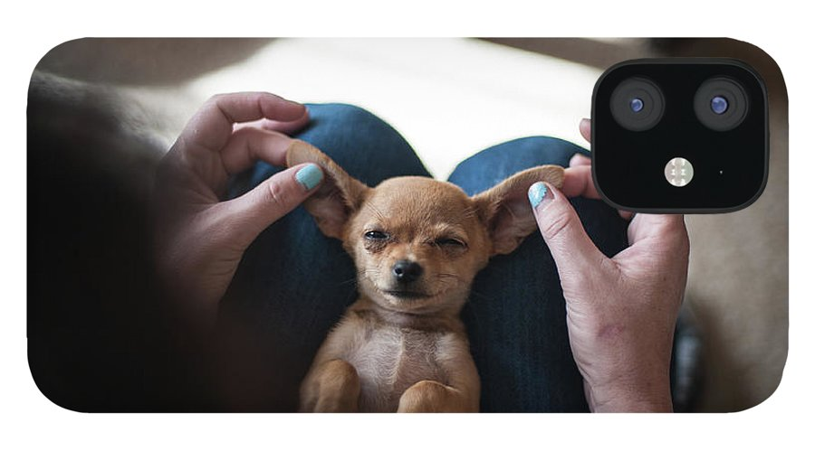 Pets IPhone 12 Case featuring the photograph Pov - Pets by Jono Winnel