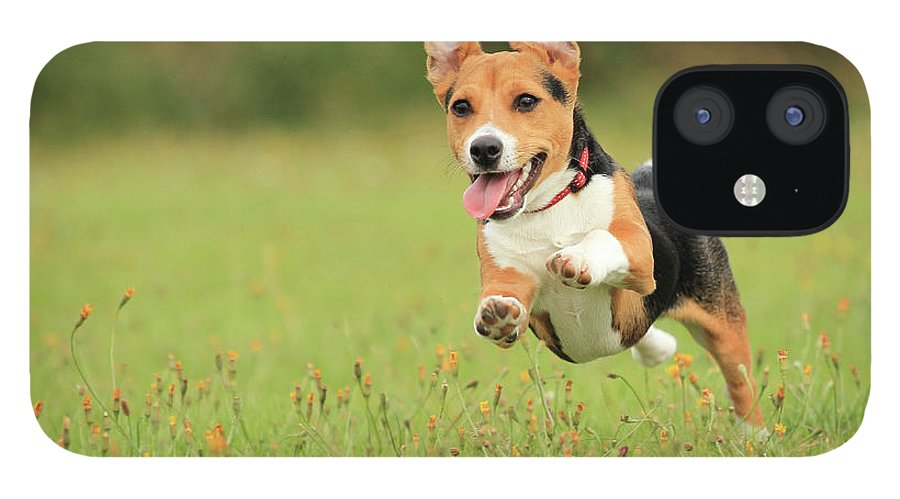 Grass iPhone 12 Case featuring the photograph Puppy by Paul Baggaley