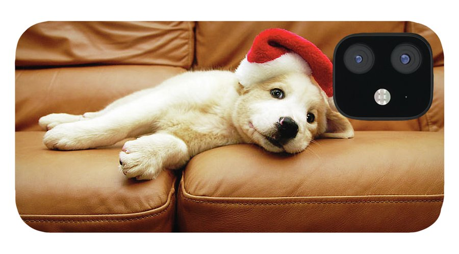 Pets IPhone 12 Case featuring the photograph Puppy Wears A Christmas Hat, Lounges On by Karina Santos