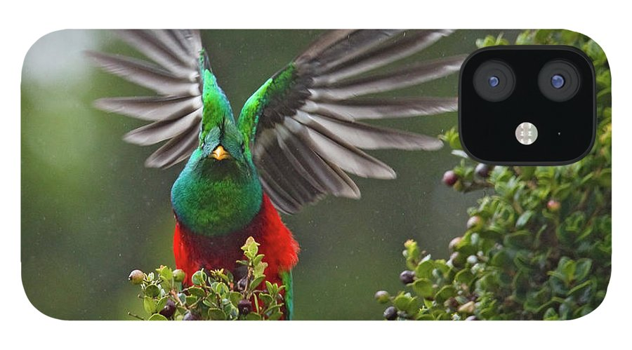 Animal Themes IPhone 12 Case featuring the photograph Quetzal Taking Flight by Photograph Taken By Nicholas James Mccollum
