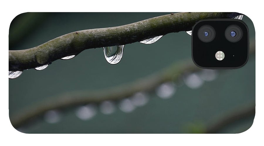 Windsor IPhone 12 Case featuring the photograph Rain Branch by Photography By Gordana Adamovic Mladenovic