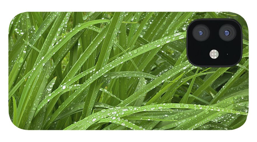 Tranquility IPhone 12 Case featuring the photograph Raindrops Of Daylily Foliage by Adam Jones