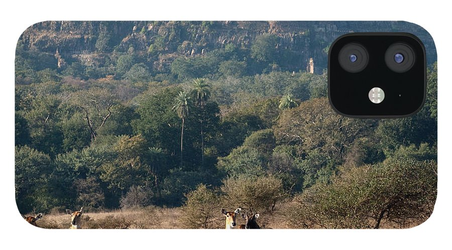 Ranthambore National Park IPhone 12 Case featuring the photograph Ranthambore Fort by Chaithanya Krishna Photography