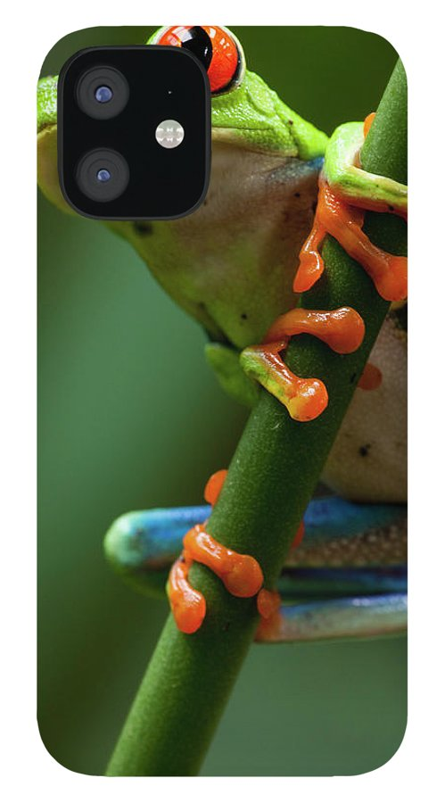 One Animal iPhone 12 Case featuring the photograph Red-eyed Tree Frog, Costa Rica by Paul Souders