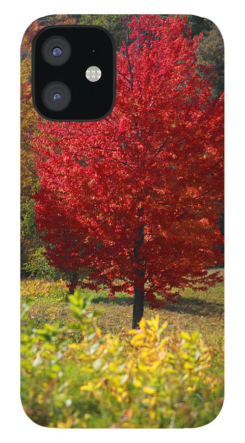 Red Maple Tree IPhone 12 Case featuring the photograph Red Maple Tree by Trevor Slauenwhite