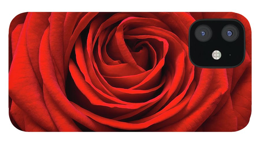 Rose Colored IPhone 12 Case featuring the photograph Red Rose by Anthony Dawson