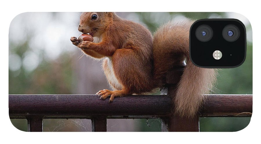 Animal Themes iPhone 12 Case featuring the photograph Red Squirrel Getting Ready For Winter by S0ulsurfing - Jason Swain