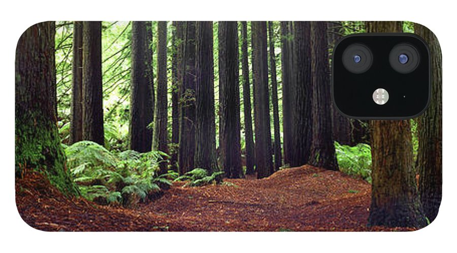 Redwood Trees iPhone 12 Case featuring the photograph Redwoods 1 by Wayne Bradbury Photography