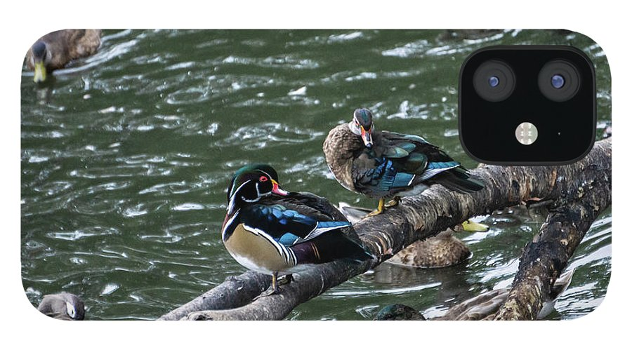 Duck IPhone 12 Case featuring the photograph Resting Ducks by Rob Olivo